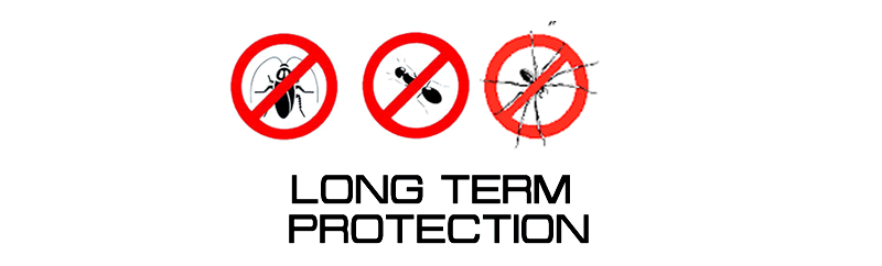 Cockroach Ant And Spider Control Total Pest Services Dalby